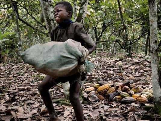 Children carrying heavy loads on farm is worrying – Development Expert