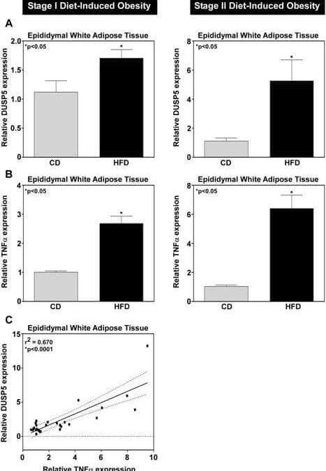 DUSP5 functions as a feedback regulator of TNFα-induced ERK1/2 dephosphorylation and inflammatory gene expression in adipocytes