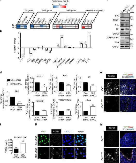 Dynamic regulation of canonical TGFβ signalling by endothelial transcription factor ERG protects from liver fibrogenesis