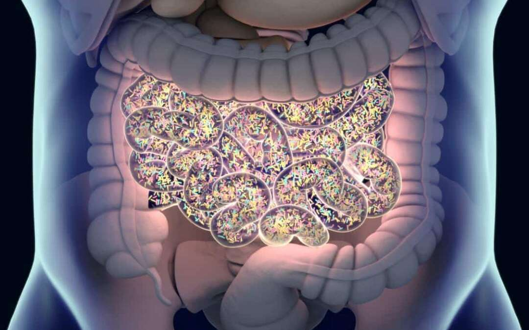 Gut fungi may hold key to metabolic health