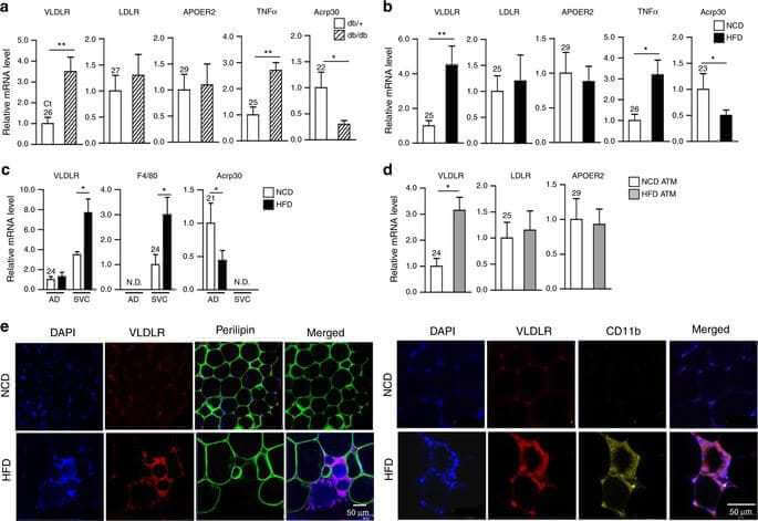 Macrophage VLDLR mediates obesity-induced insulin resistance with adipose tissue inflammation