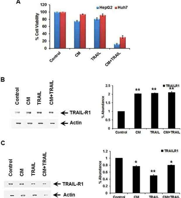 N-terminal gelsolin fragment potentiates TRAIL mediated death in resistant hepatoma cells