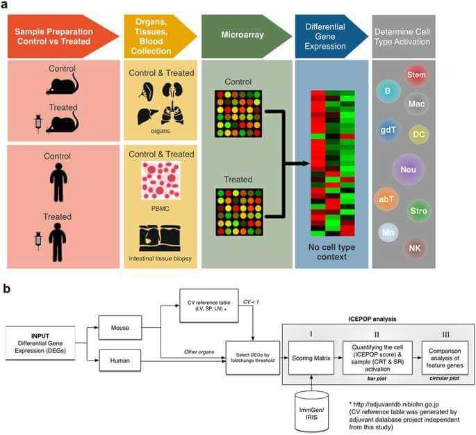 Quantifying the relative immune cell activation from whole tissue/organ-derived differentially expressed gene data