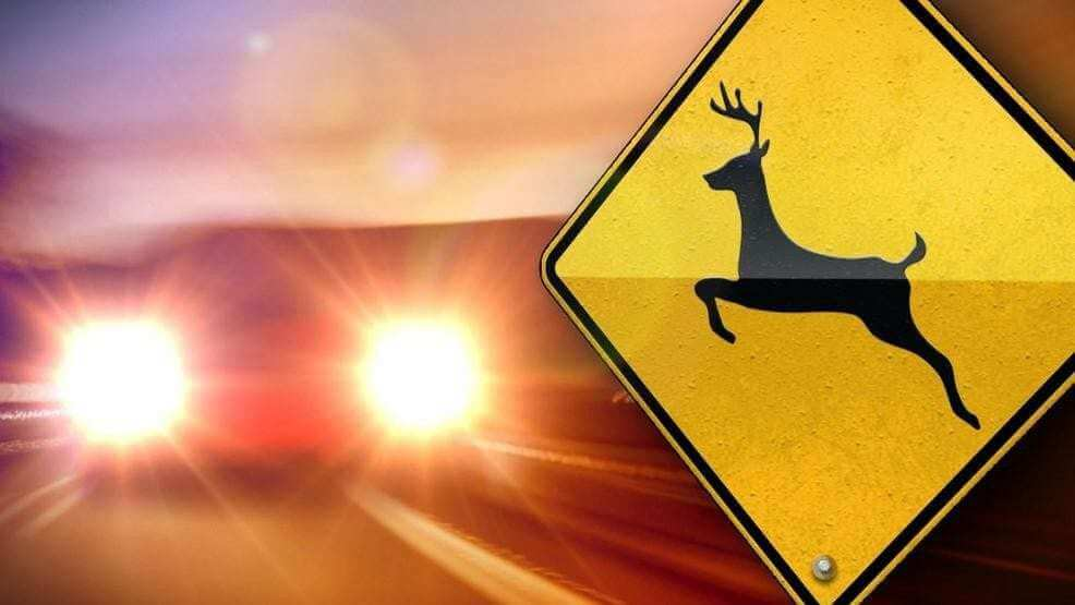 Seattle man injured in motorcycle vs. deer crash near Naches
